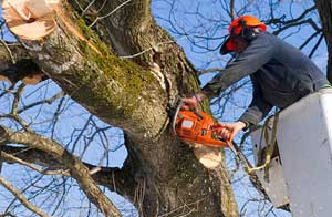 Tree Surgery Hazlemere